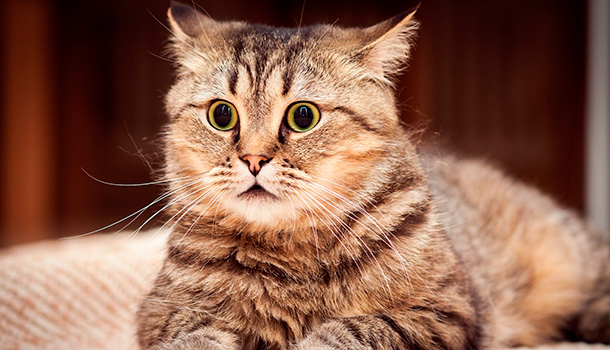 gato-assustado