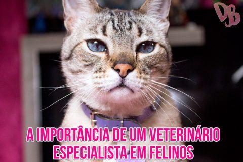 A importância de um veterinário especialista em felinos